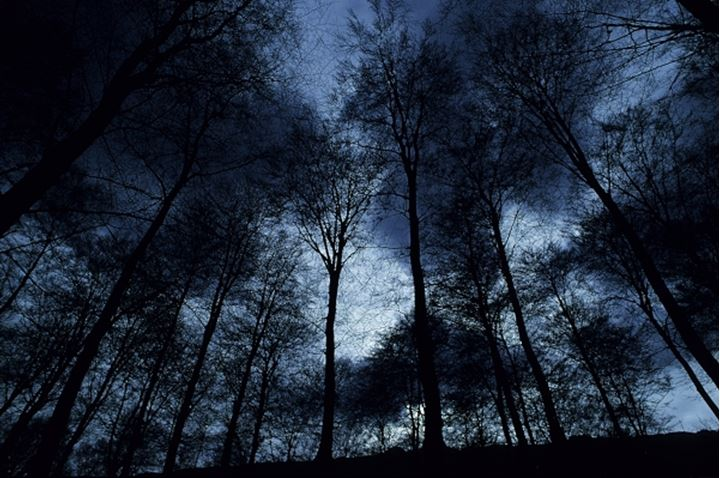 Low angle view of trees silhouetted at night