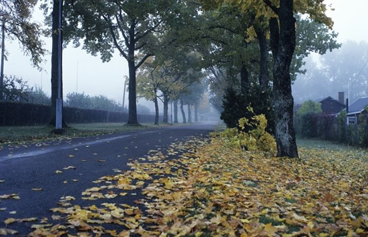 A road along with trees and autumn leaves on the ground