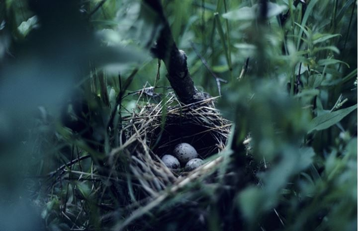High angle view of a bird's nest with eggs