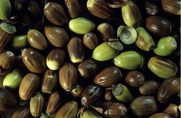 High angle view of raw dates