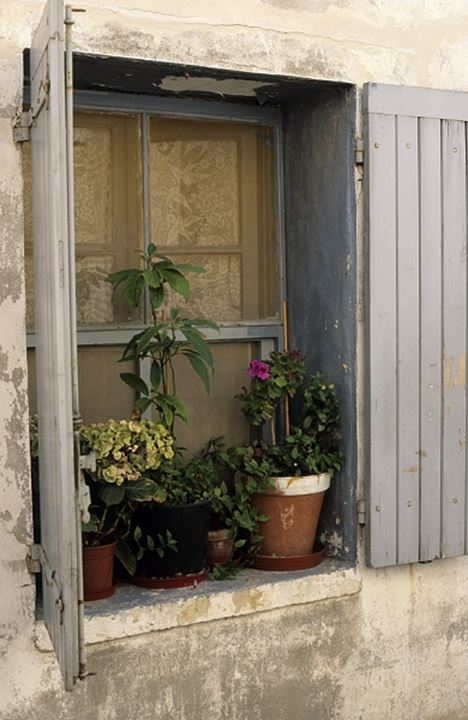 Window with flower pots in Italy, Europe