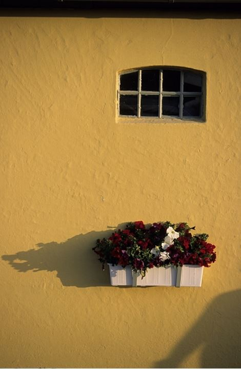 Window with planter box on yellow wall, Italy, Europe