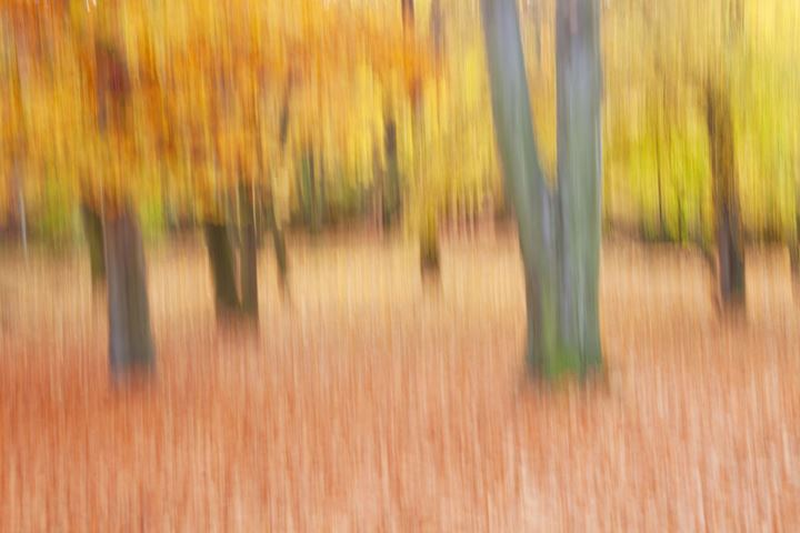 Abstract Image of Forest in Autumn.