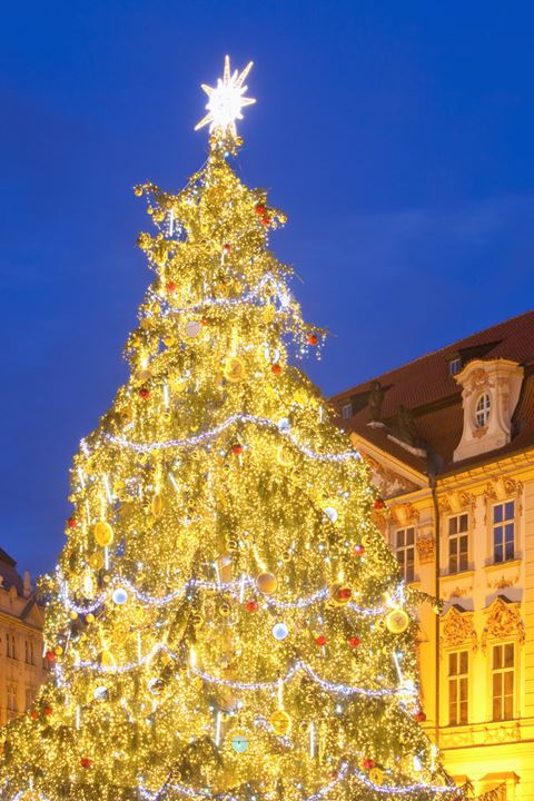 Czech Republic, Prague - Christmas Tree at the Old Town Square