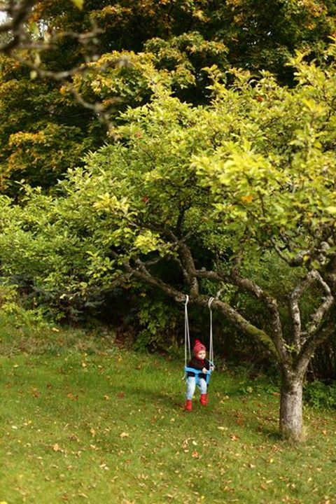 Baby boy using a swing, late summer, Sweden.