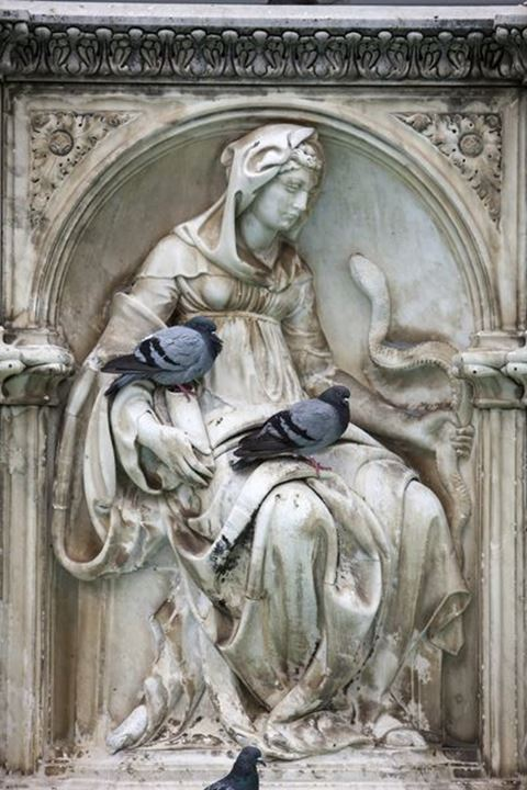 Doves sitting on the statues,Piazza Campo, Siena