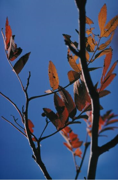 A close-up of a tree branch