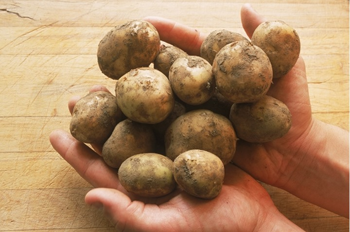 Hands holding fresh picked potatoes in kitchen