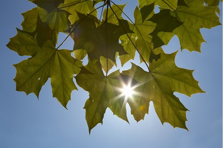 Low angle view of sunbeam passing through leaves