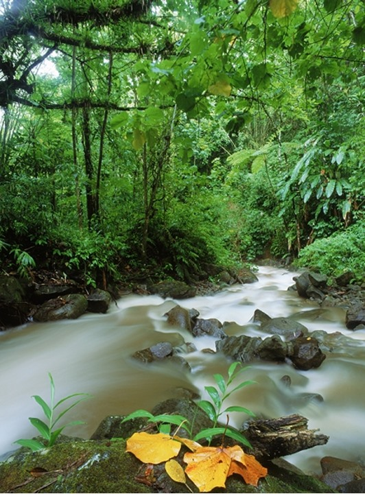 Stream in rain forest jungle on St. Lucia Island in West Indies