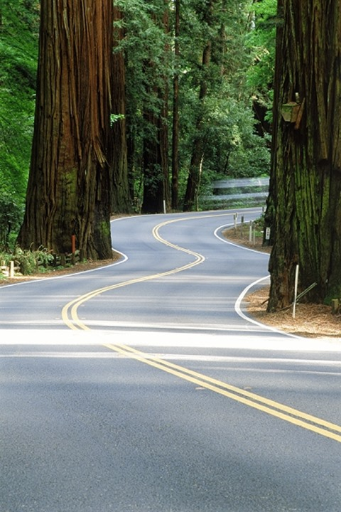 Highway 101 winding through Redwood National Forest in Northern California