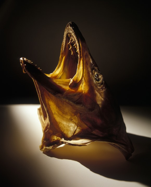 Head of a dried fish